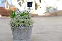 雑貨や寄せ植え - mon dimanche blog