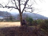 またまたでかい鹿 - にじまる食堂 & にじまる農園