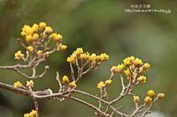 早春の向島百花園内の模様はまだ少し寂しい感じ(-_-) - 自然のキャンバス