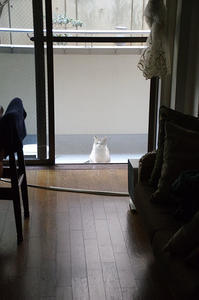最近の猫事情13 - 鳥会えず猫生活