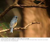 秋ヶ瀬公園・野鳥園 2017.2.26(2) - 鳥撮り遊び