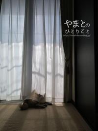 yamatoのお尻【動画あり】 - yamatoのひとりごと