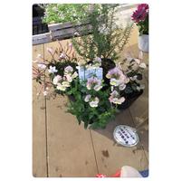 お花の植え替え - crossroadsのblogroads2