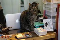 シカクの看板猫にゃん太 @大阪・中津 - たんぶーらんの戯言