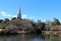 春を探して~♪お写んぽ散策 新宿御苑 1 - Let's Enjoy Everyday!