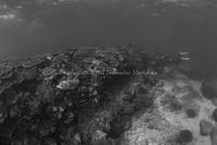 石堤 - Diving Life ~Aita pe'a pe'a~