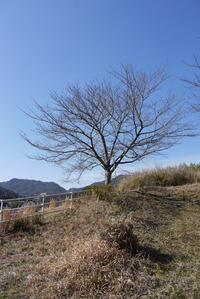 裏山散策 〜二月の終わり〜 - CROSSE 便り