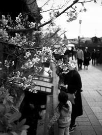 春近し - 節操のない写真館