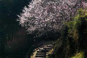 熊本市内を徒然 - 風景写真アラカルト