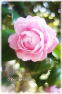 優しい春色 - 日々楽しく ♪mon bonheur