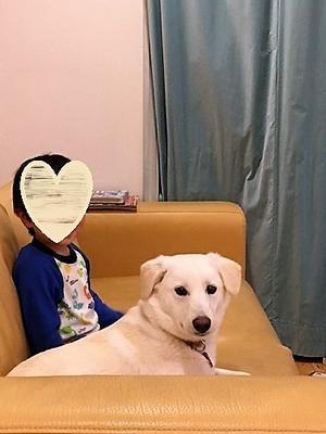 幸せ便り もうすぐ春 - Together with the dog  ~ ファンパウズ