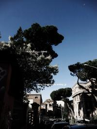 """""""3月になりました、ミモザ♪^0^"""" - ROMA ~ 世界遺産の街 ・ローマ  ふぉとぶろぐ ~"""
