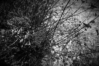 春待ち鳥屋野潟(鐘木地区) - Yoshi-A の写真の楽しみ