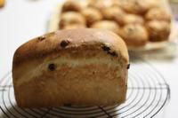 2/20-3/1 - 手作りパン教室 Runrun  大阪 堺 天然酵母