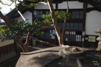 奈良市 二月堂の椿 - ぶらり記録(写真) 奈良・大阪・・・