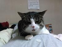 【猫】重いのよ - 人生を楽しくイきましょう!