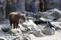 「ムツ」とカラス - 動物園放浪記