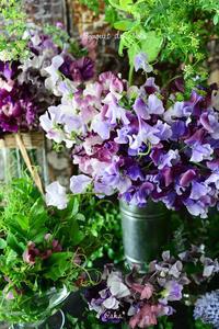 Bouquet de Photo 2月スイトピー - Amour Tendre