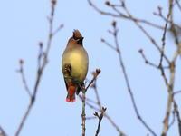 今季初撮りだったけど・・・ - 『彩の国ピンボケ野鳥写真館』