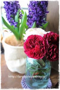 デルバールの薔薇2種 - La rose 薔薇の庭