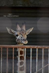 プリンセスちゃん(仮) - 動物園でお散歩