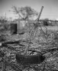 2017年3月4日 用途不明印象絶大な農地のアート - Silver Oblivion