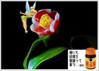 「見る薬」妖精を要請・・ - デジカメ散歩写真