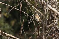 長谷川の鳥 - くろせの鳥