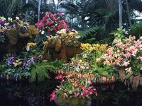 ニューヨーク植物園でオーキッドショーを堪能 - ニューヨークで働く&子育て