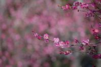 春を探しに ~ 近くの公園散歩 - 季節の風を追いかけて
