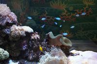 姫路市立水族館 - ほっと♪ふらっと♭写真道楽