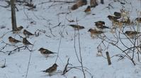沢山の野鳥たち - Naturfreude