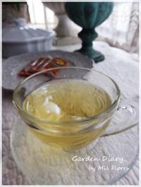 Moringa Tea - Garden Diary