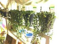 グリーンネックレス入荷しました! - 手作り雑貨&観葉植物 kinomi