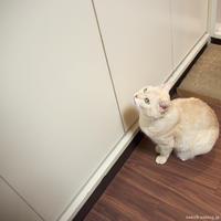 はいれるはずよ! - 賃貸ネコ暮らし|賃貸住宅でネコを室内飼いする工夫