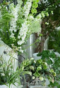 白の世界 - VERDURE 「ヴェルデュール花教室」花暮らしブログ