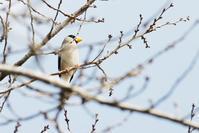 槻川に集う野鳥(3月1日) - 何でも写真館