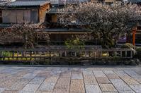 祇園白川の梅 - 鏡花水月