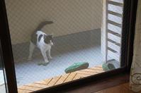 最近の猫事情15 - 鳥会えず猫生活