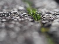 アスファルトの草 - 鹿深の森