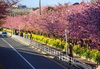 桜並木を歩く  2017-03-09 更新 - 夕陽に魅せられて・・・
