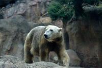 パンダ化け中 - 動物園へ行こう