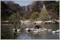 六義園 -14 - Camellia-shige Gallery 2