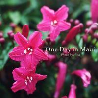 マウイの休日(1) Gentle Rain in Maui - Cucina ACCA