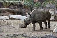 2017年2月 天王寺動物園 その1 不機嫌なShilka - ハープの徒然草