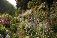 春の薔薇庭園巡りバスツアーのお知らせ - 元木はるみのバラとハーブのある暮らし・Salon de Roses