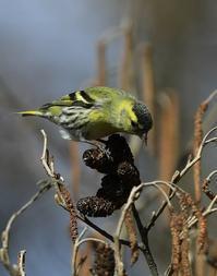 公園の野鳥 - 菜奈ちゃんコーナー