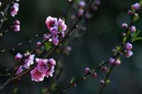 弥生3月 - 旅のかほり