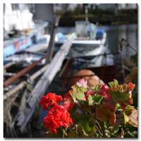 #2117 赤い花 - at the port