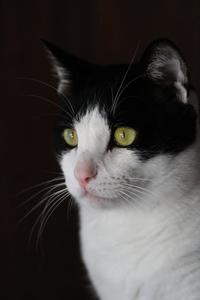 200mm単でナァ~ツ - Black Cat Moan